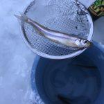 《ワカサギ釣り青森》小川原湖に隣接する【内沼】で家族と初めての氷上ワカサギ釣り